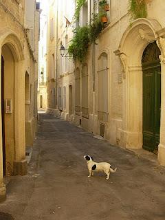 montpellier a.zamboni - Guia de Roma em Dordogne, França!