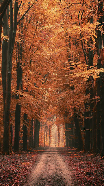 Screen background Forest, alley, trees, road, autumn, leaves