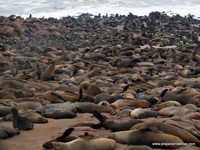 Leones marinos en Cape Cross Namibia