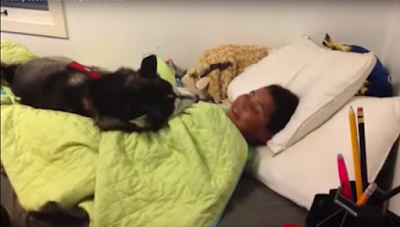 This Siberian Husky doesn't want to get up