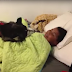 See how this dog tells his owner that he wouldn't like to get up