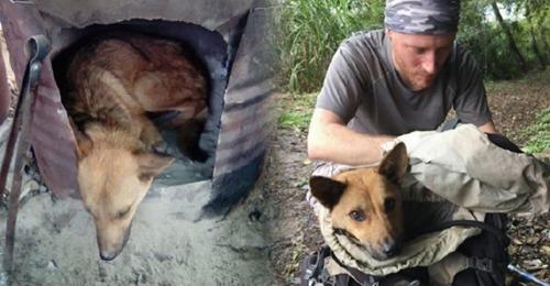 Спасение раненой собаки, рискуя своей жизнью