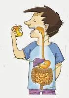 Resultado de imagen para sistema digestivo para niños