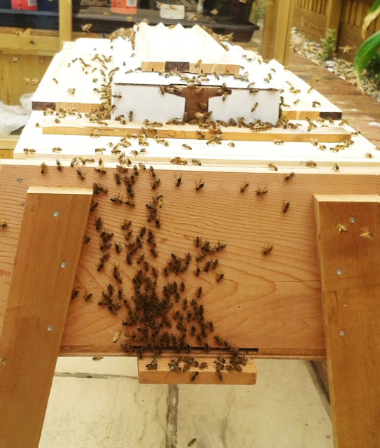 Beekeeping bees entrance Top Bar Hive (TBH)