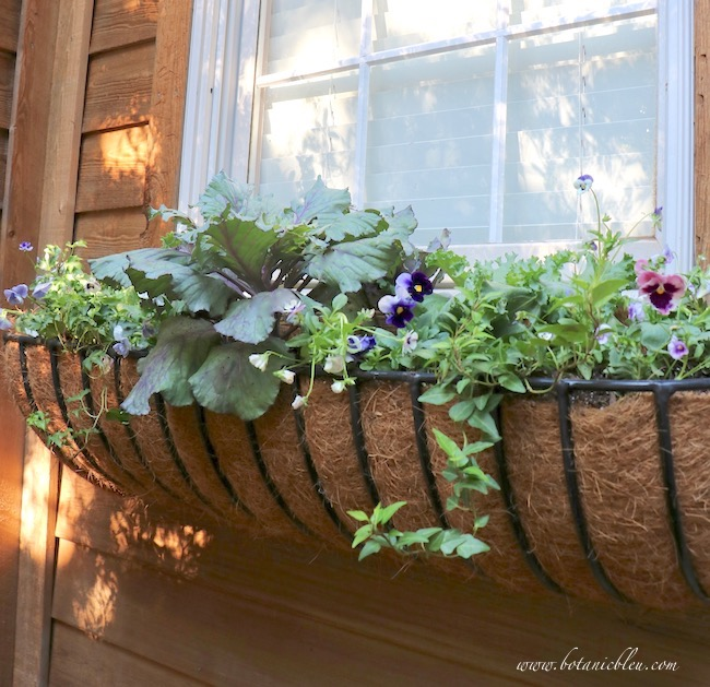 create a beautiful fall window basket filled by pansies, kale, ivy