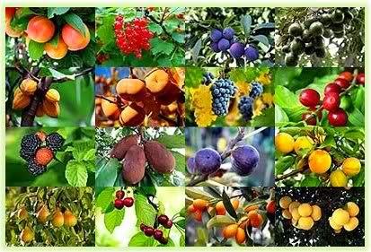 Historia faro del presente cuando con tus manos coges - Cuando plantar frutales ...