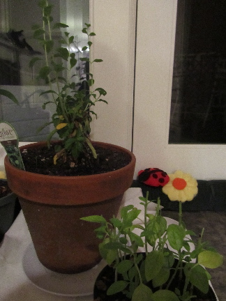 creative savv: Updates on my indoor plants and plant experiments