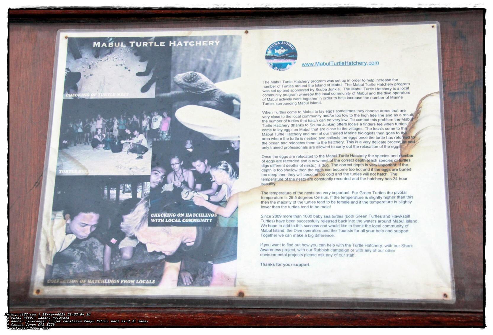 gambar nota penjelasan projek penetasan penyu di Pulau Mabul