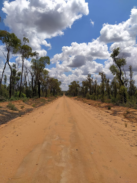 Dirt road in Pilliga Forest