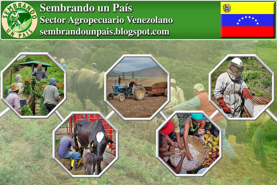 sector agropecuario venezolano