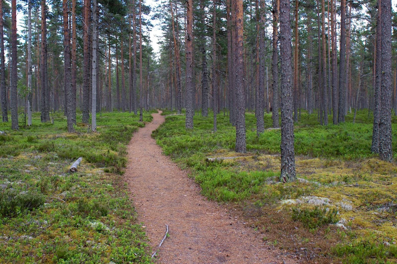 Lauhanvuori, Isojoki