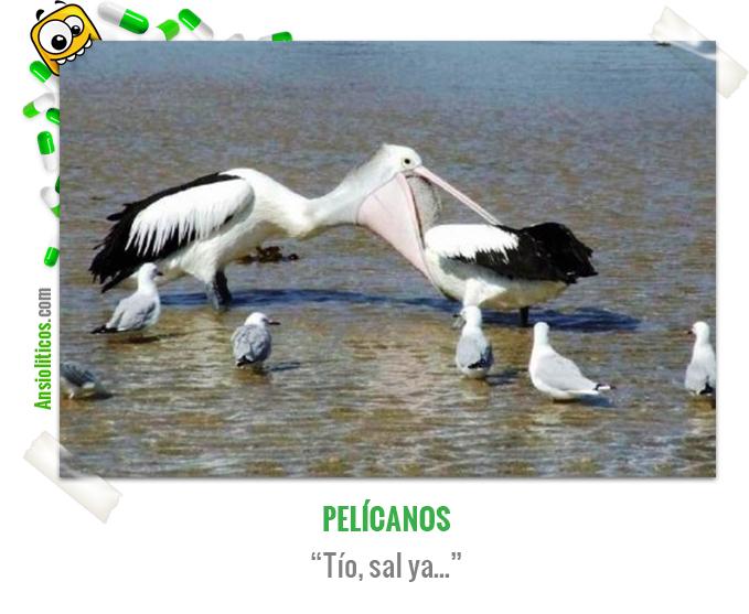 Chiste de Animales de un Pelícano dentro de un Pelícano