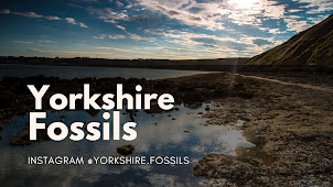 YORKSHIRE FOSSILS