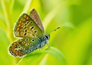 La Magia Dell Effetto Farfalla Si Dice Che Il Minimo