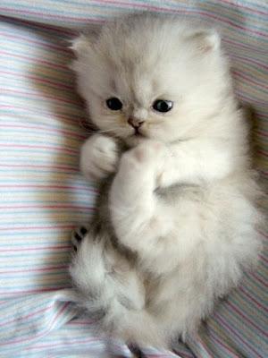 صور قطط كيوت