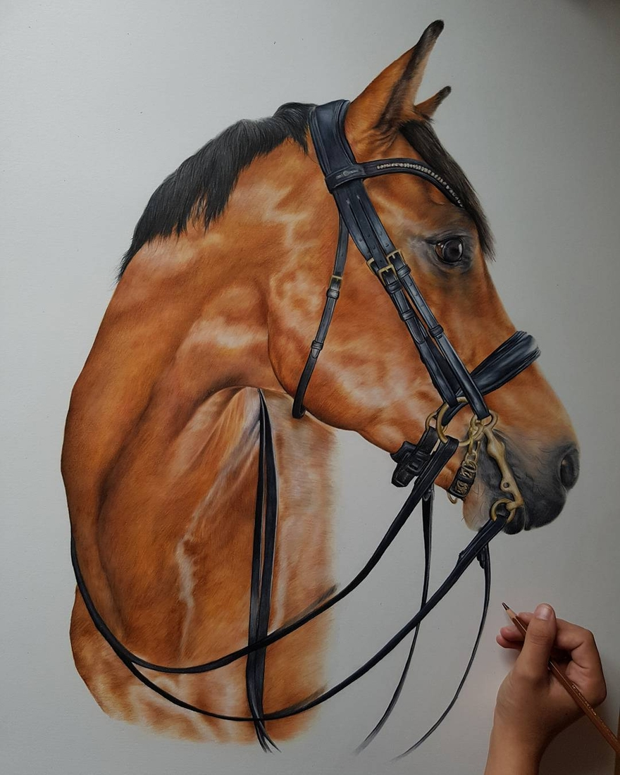 07-Horse-Portrait-Bethany-Vere-Colored-Pencils-Realistic-Animal-Drawings-www-designstack-co
