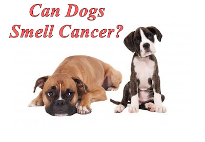 Dogs Can Smell The Cancer and Other Diseases!