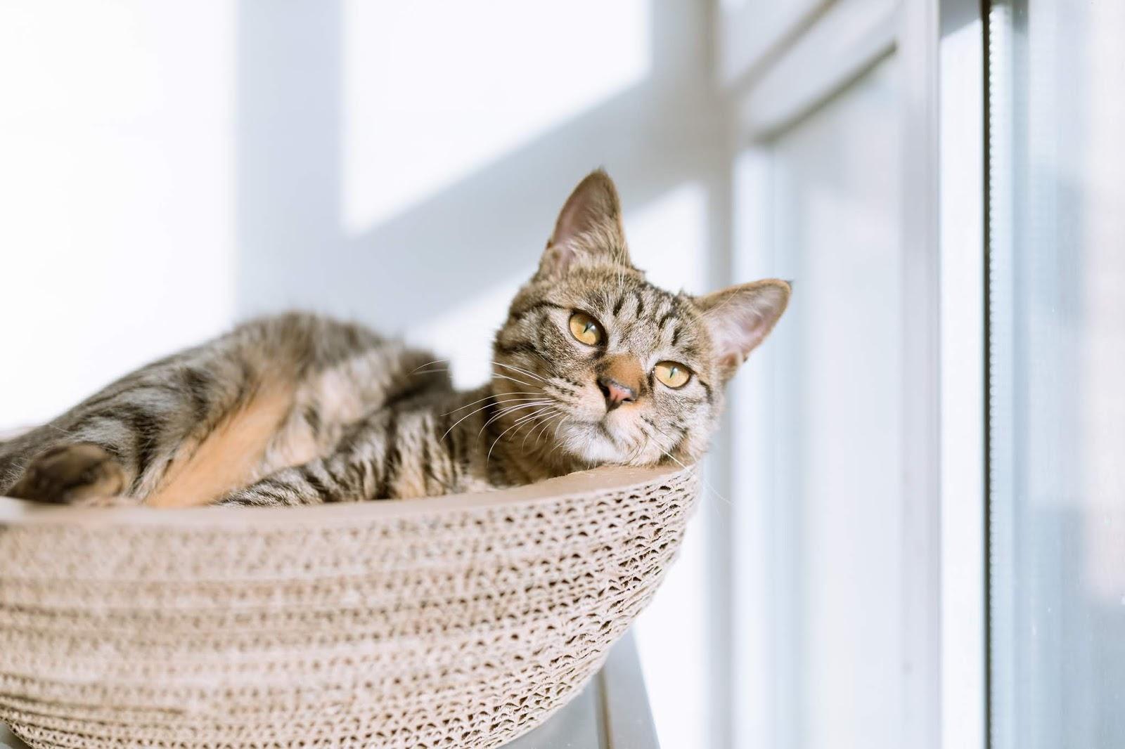O tym, dlaczego fajnie jest mieć kota!