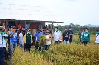 Bupati Lingga Hadiri Panen Raya Padi di Desa Panggak Darat