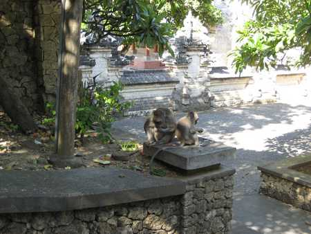 Monkey in Pura Uluwatu Temple Bali