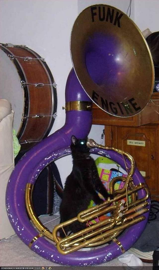 Funny cats - part 255, cute cat images, funny cat photo