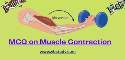 MCQ on Muscle Contraction Pdf