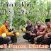 Melon Golden Ditanam Diatas Paving