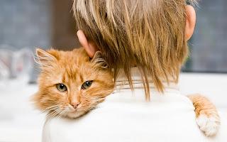 Un estudio científico demuestra que los gatos reflejan la personalidad de su dueño