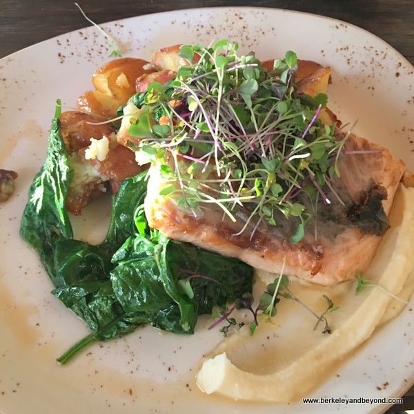 salmon dinner at Cello restaurant at Allegretto Vineyard Resort in Paso Robles, California