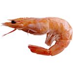 shrimp in spanish