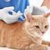 Vaksin Kucing