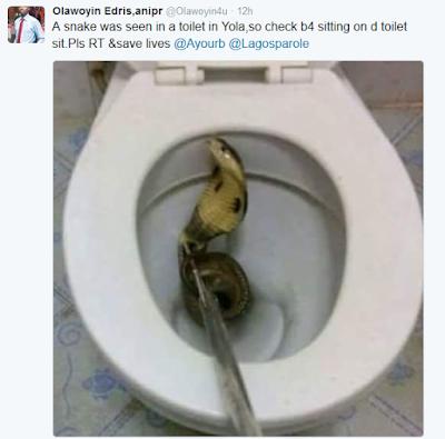 snake found inside toilet in yola nigerian breaking