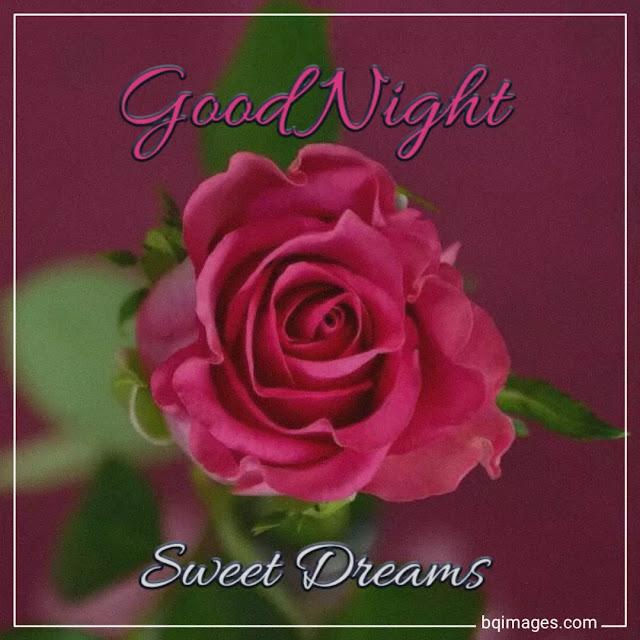 rose flower good night images