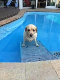 golden natação