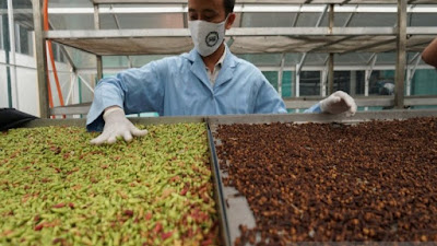Pekalongan Ready to Export Herbal Medicine to Overseas Market