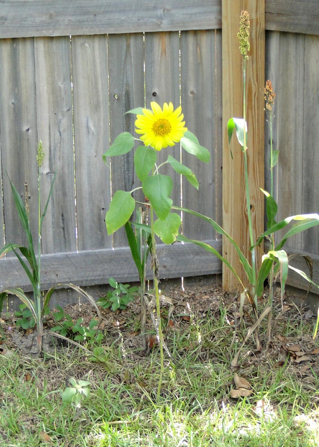Sunflower The Journey Of Parenthood