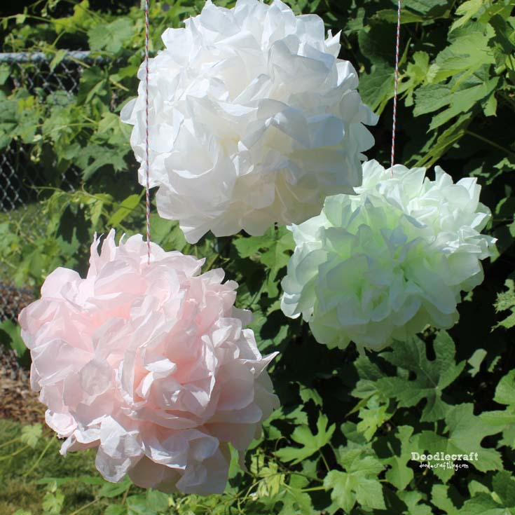 how to make tissue paper pom pom flowers in any color you want.