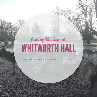 Feeding the Deer at Whitworth Hall Deer Park