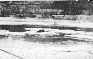 A photograph of a figure slumped on a floating piece fo ice.