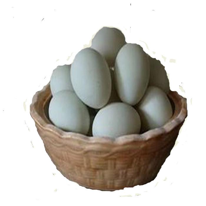 Telur Itik