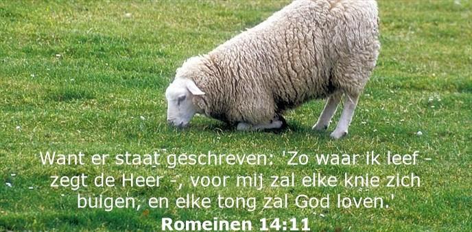 Want er staat geschreven: 'Zo waar ik leef - zegt de Heer -, voor mij zal elke knie zich buigen, en elke tong zal God loven.'