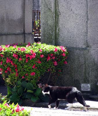 Gato andando por uma alameda de cemitério