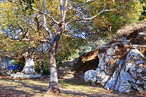 Danakos - Naxos (2)