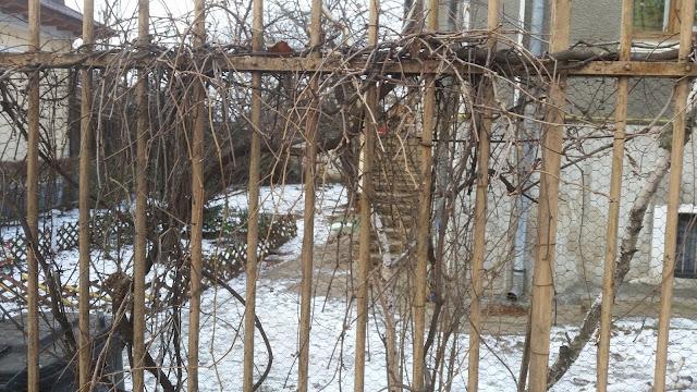 גינה בחורף