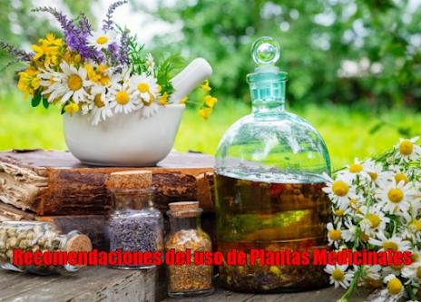 Recomendaciones del uso de Plantas Medicinales