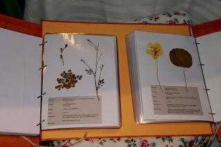 little old cottage zertifizierter kr uterp dagoge bne die pr fung specialist for wild herbs. Black Bedroom Furniture Sets. Home Design Ideas