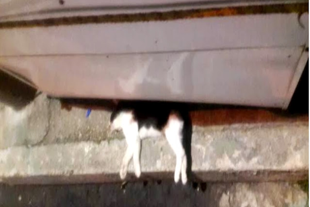 Homem é preso após ser flagrado esfaqueando gato e jogando em lixeira