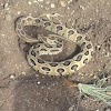 Poisonous Snake|साप प्रकार,गैरसमजुती,विष कसे बनते,चव,प्रतिविष कधी.
