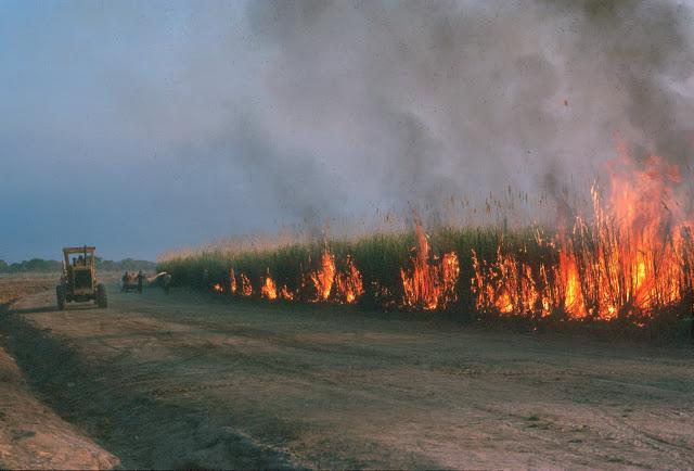 Feux de feux de brousse dans les collines bassari