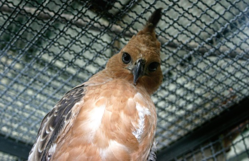 Indonesian birds face extinction due to pet trade
